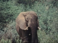 Elefant Lake Manyara Nationalpark
