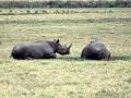Nashörner Ngorongoro Krater