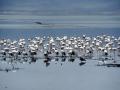 Flamingos Ngorongoro Krater